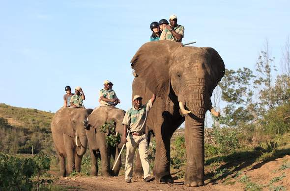 Elephant excursions in the Garden Route.