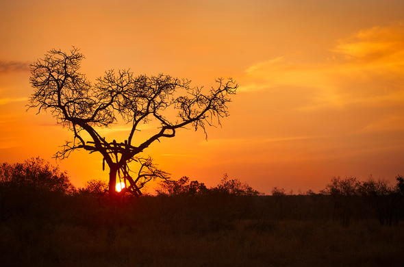 Witness the South African Sunset.