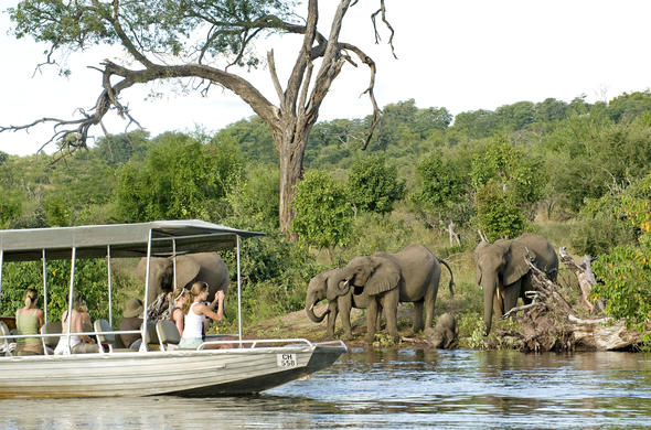 Boat safaris to witness elephant coming for a drink.