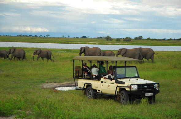 Track an abundance of elephant on game drives.