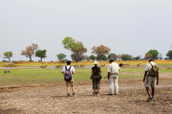 Walking safaris to track an abundance of game.