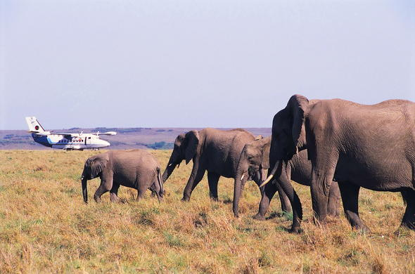 Private air transfers to Mara Intrepids.