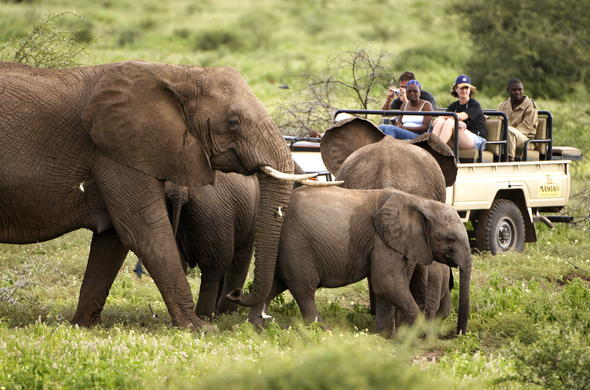 See Elephants while on a guided Tuli safari in Botswana.