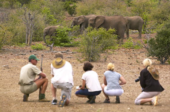 Observe elephants on a walking safari in Tuli Game Reserve.
