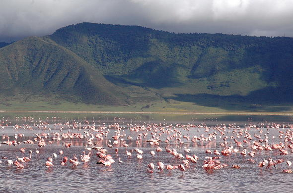 Observe thousands of flamingo.