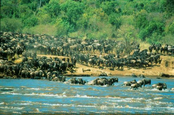 Witness the Great Migration in Masai Mara.