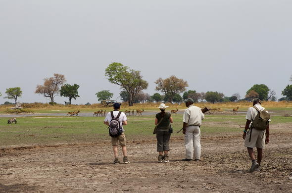 Walking safari in the Okavango Delta.