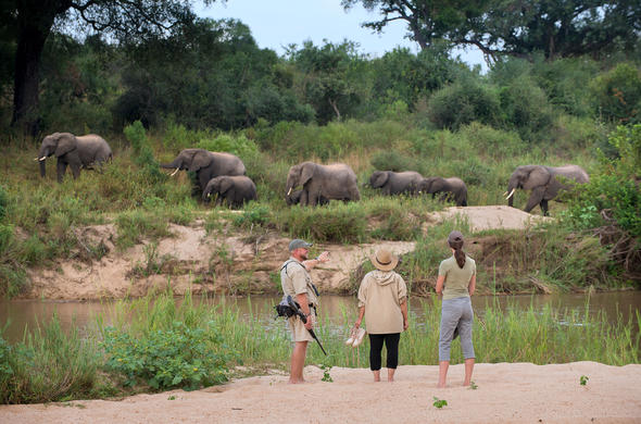 Exeter River Lodge walking safari
