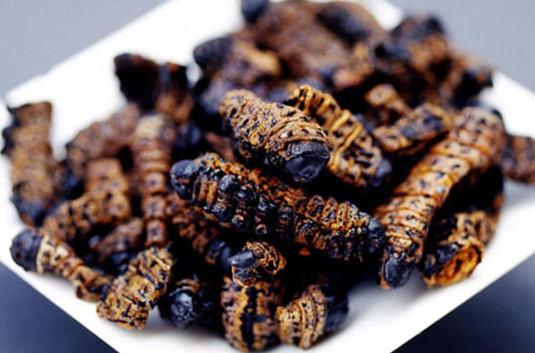 Fried mopani worms.