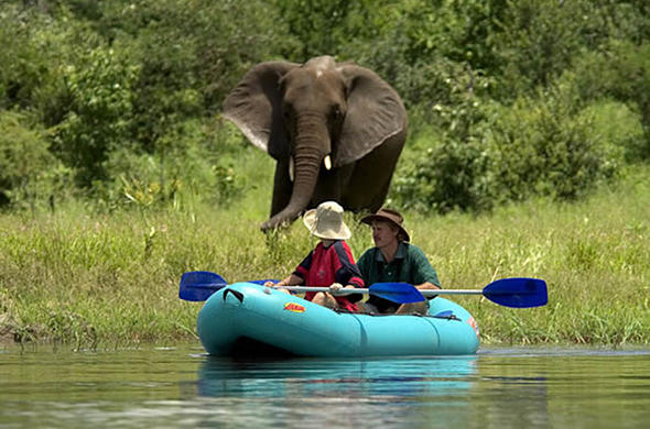 Elephant encounter during canoe safari on the Zambezi
